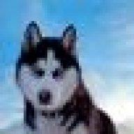 Husky09